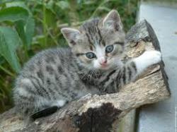 chaton-1-mois.jpg