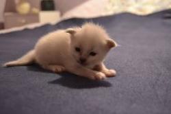 chaton-15-jours.jpg