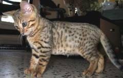 chaton-3-mois.jpg