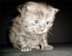 chaton-3-semaines.jpg