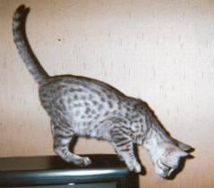 chaton-4-mois.jpg