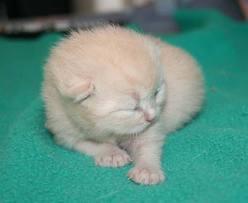 chaton-8-jours.jpg
