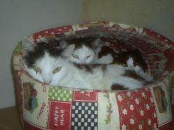 chats-courmont-2.jpg