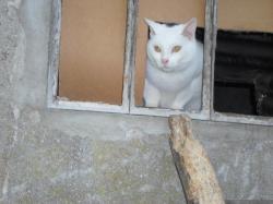 chats-courmont-3.jpg