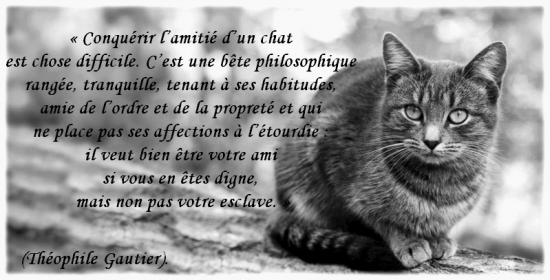 Citations en images l amitie d un chat 5194966 l