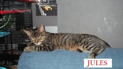 Jules 09 14