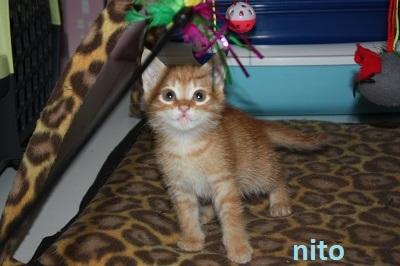 Nito 1