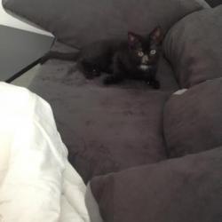 et oui j ai mon canapé!!!